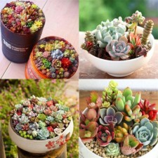 100pcs Real Seeds Mix Mini Succulent Cactus Seeds Rare Perennial Herb Plants