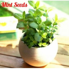 1 Pack Mint Seeds Bonsai Potted Plants Herb Green Mint Mentha Viridis Garden
